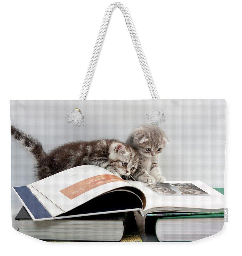 Scottish Fold Weekender Tote Bags