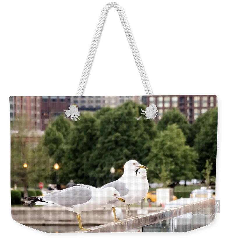 3 Seagulls In A Row Weekender Tote Bag featuring the photograph 3 Seagulls In A Row by Cynthia Woods