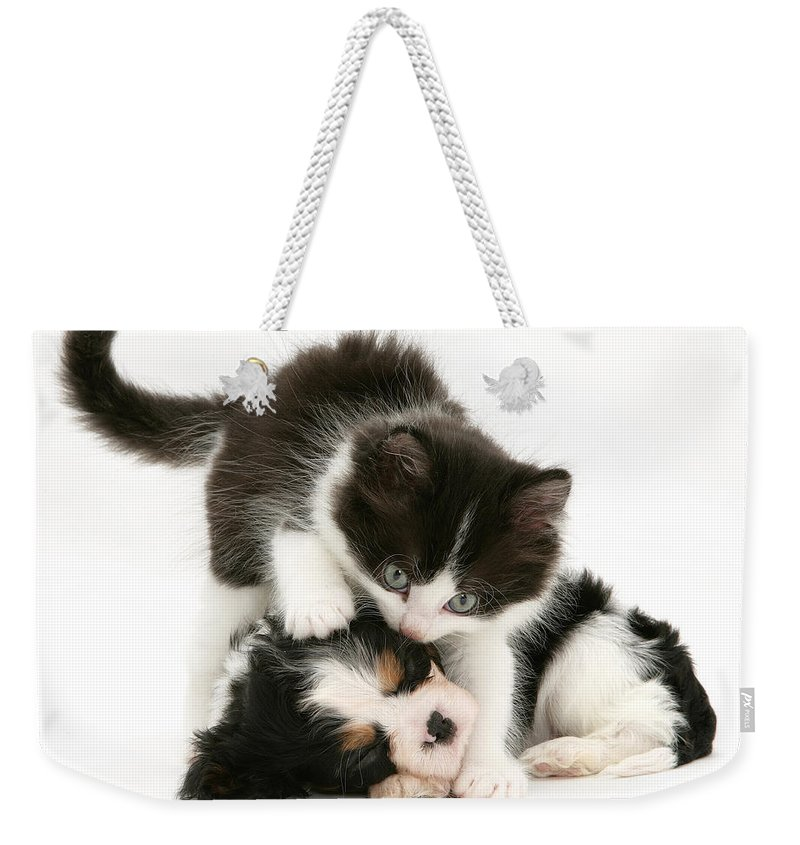 Animal Weekender Tote Bag featuring the photograph Sleeping Puppy by Jane Burton