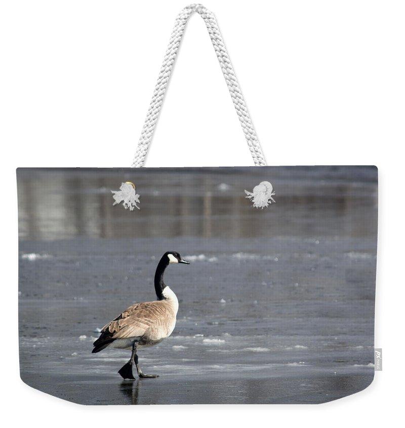 Canadian Goose Weekender Tote Bag featuring the photograph Strut by Linda Kerkau