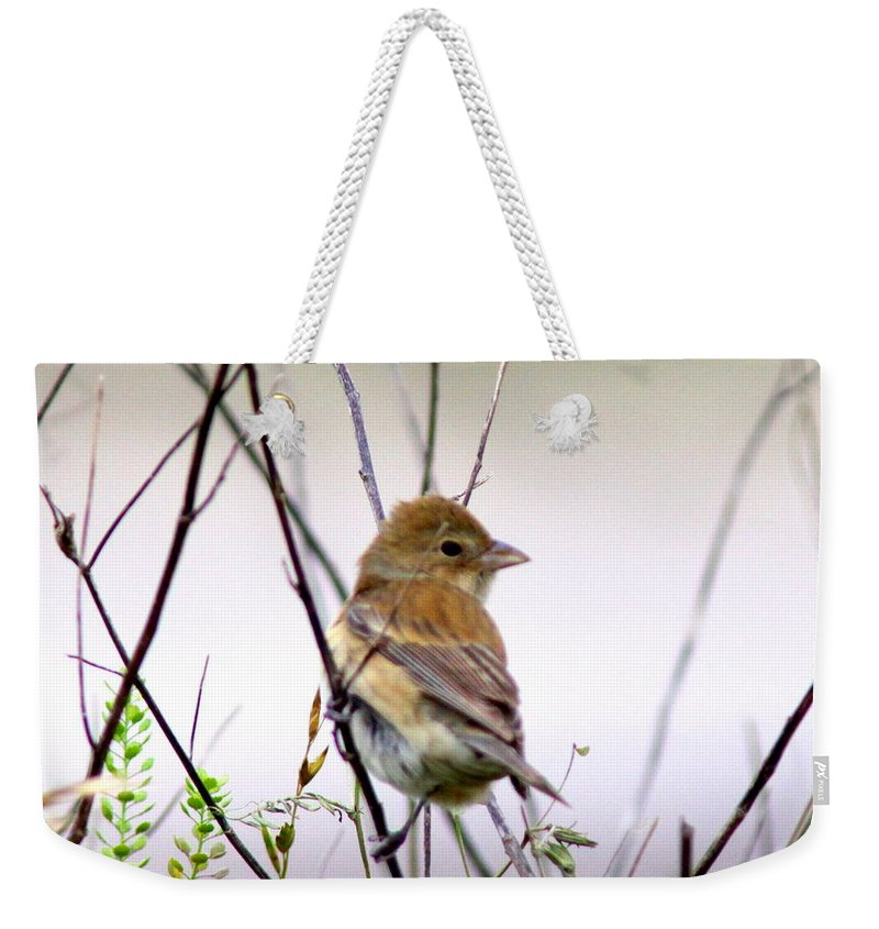 Tanager Weekender Tote Bag featuring the photograph 3571 - Tanager by Travis Truelove