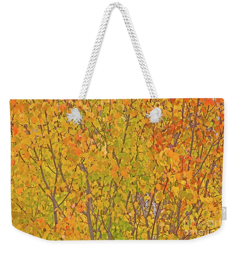 Autumn Weekender Tote Bag featuring the photograph 3983 Autumn Pleasure by Darrel Giesbrecht