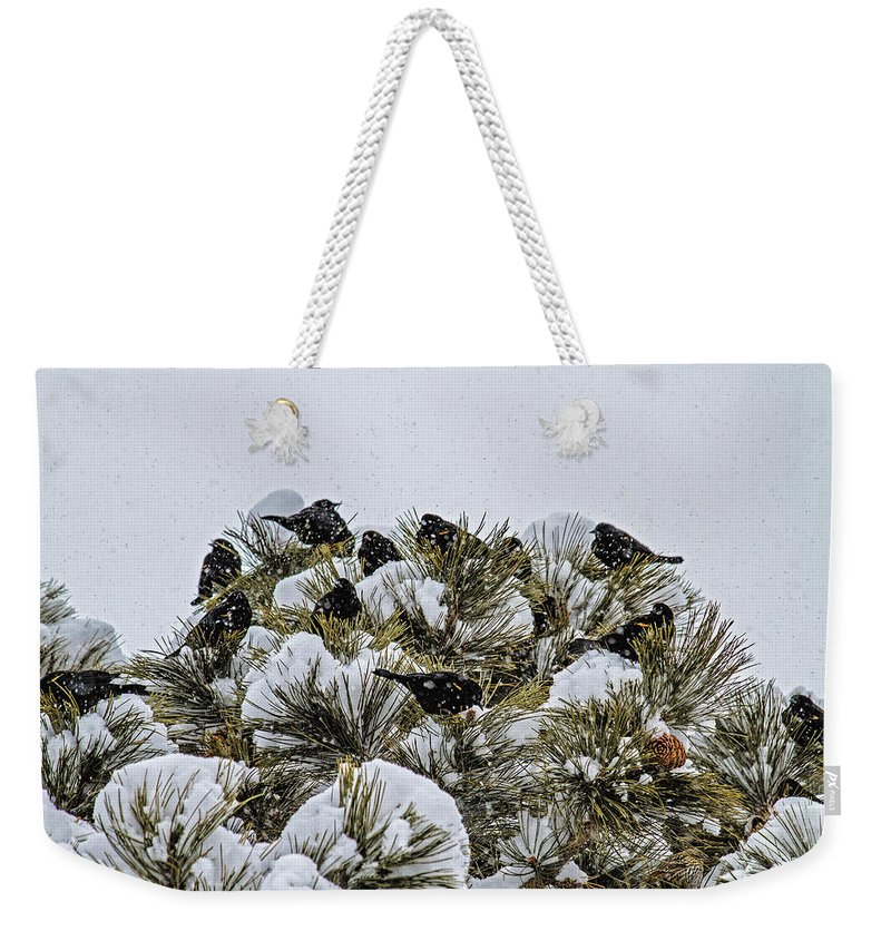 Bird Weekender Tote Bag featuring the photograph 4 And 20 Blackbirds by Alana Thrower
