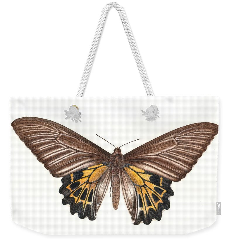 Butterfly Weekender Tote Bag featuring the painting Birdwing Butterfly by Rachel Pedder-Smith