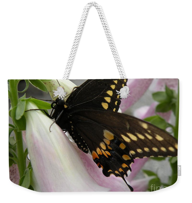 Black Weekender Tote Bag featuring the photograph Black Swallowtail Butterfly by Joanne Young