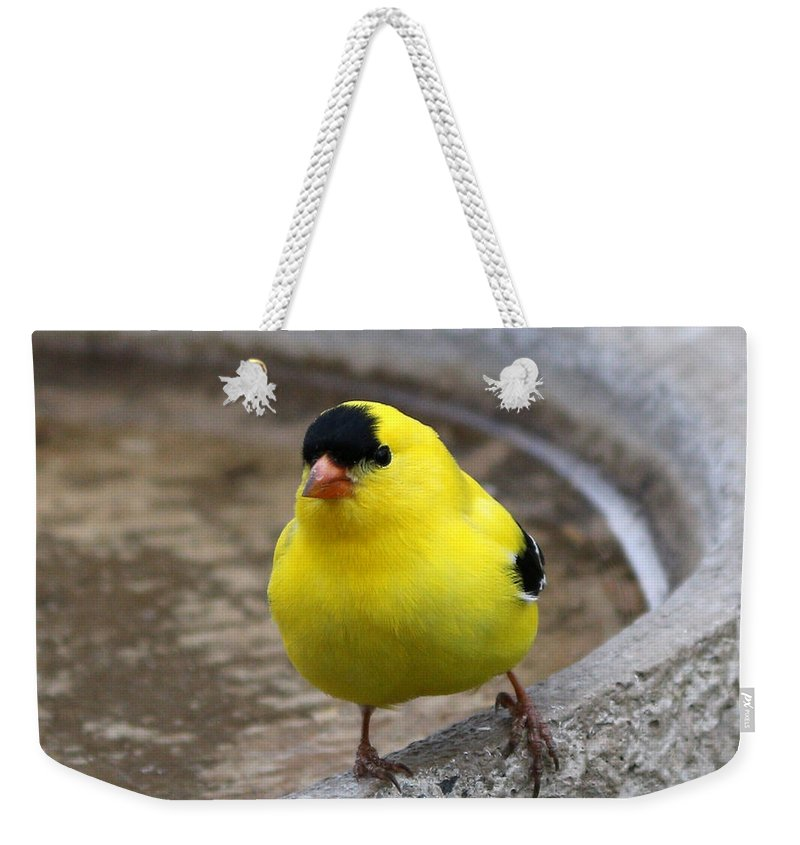 Finch Weekender Tote Bag featuring the photograph Goldfinch by Lori Tordsen
