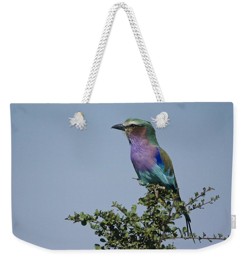 Africa Weekender Tote Bag featuring the photograph Lilac-breasted Roller by Michele Burgess