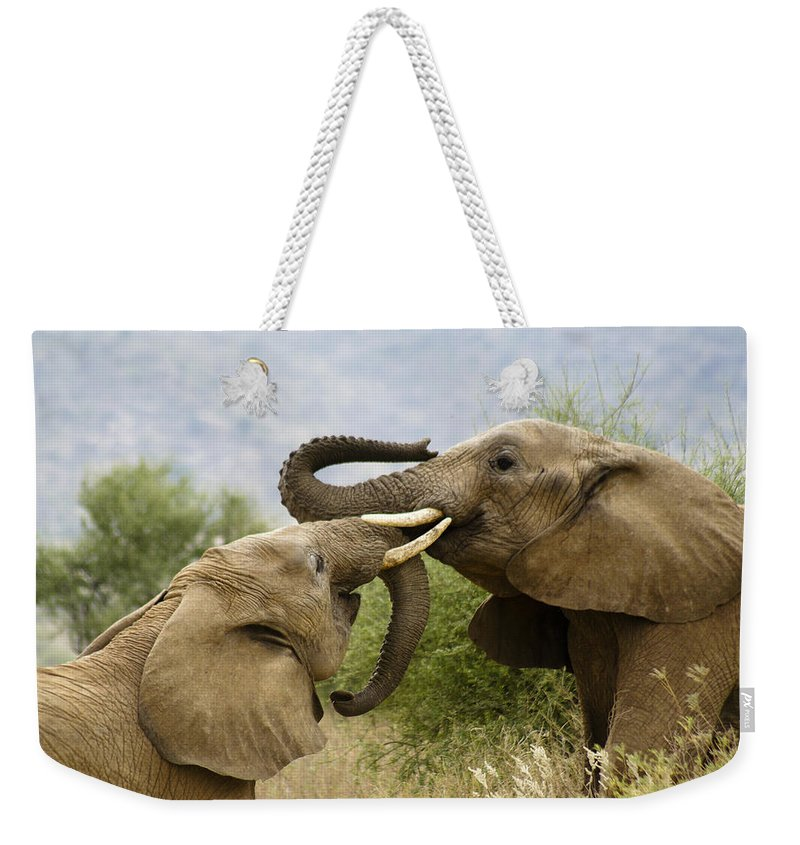 Africa Weekender Tote Bag featuring the photograph Playtime by Michele Burgess