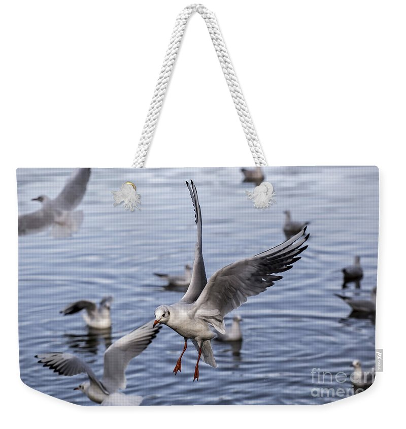 Sea Weekender Tote Bag featuring the photograph Stover Lake by Sebastien Coell