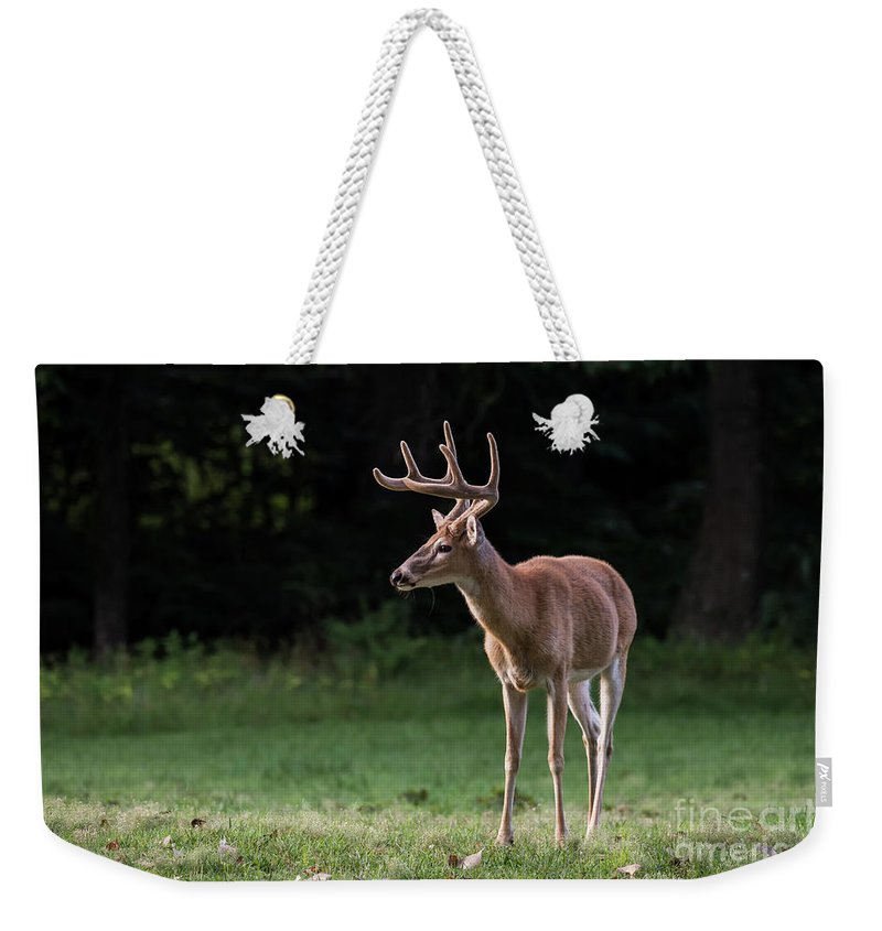 Buck Weekender Tote Bag featuring the photograph 4 X 4 Buck by Andrea Silies