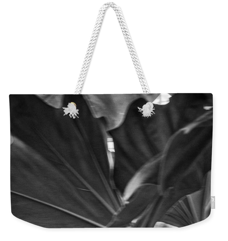 Green Leaves Weekender Tote Bag featuring the photograph 4327- Leaf Black And White by David Lange