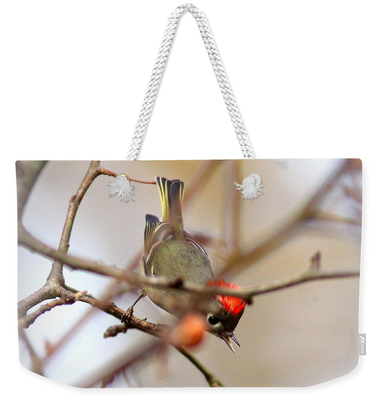 Ruby-crowned Kinglet Weekender Tote Bag featuring the photograph 4370 - Ruby-crowned Kinglet by Travis Truelove