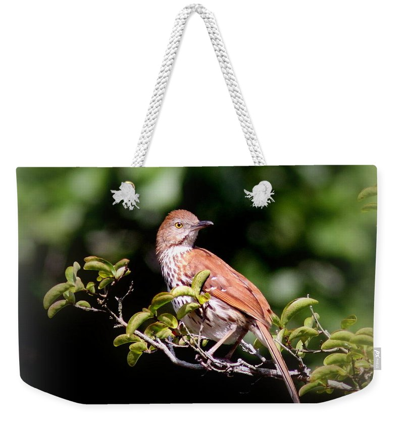 Brown Thrasher Weekender Tote Bag featuring the photograph 4979 - Brown Thrasher by Travis Truelove