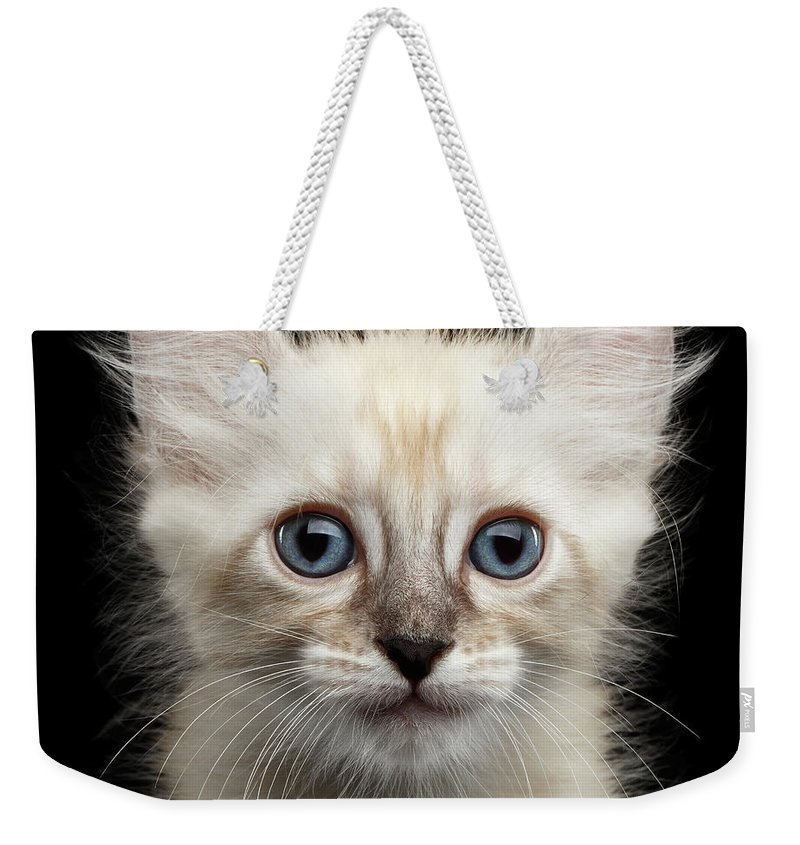 Curl Weekender Tote Bag featuring the photograph Cute American Curl Kitten With Twisted Ears Isolated Black Background by Sergey Taran