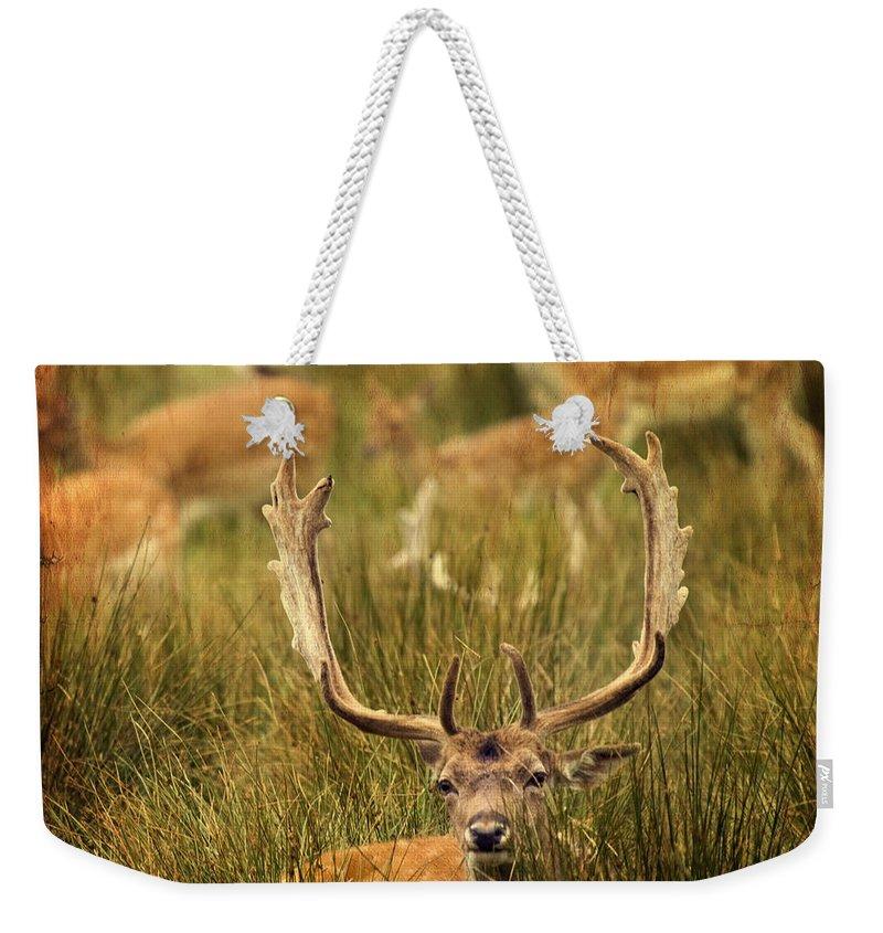 Fallow Deer Weekender Tote Bag featuring the photograph Fallow Deer by Angel Ciesniarska