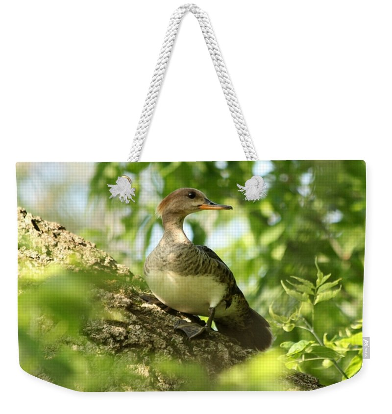 Immature Weekender Tote Bag featuring the photograph Immature Hooded Merganser by Lori Tordsen