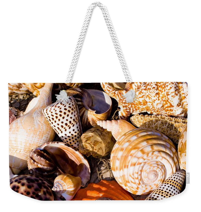 Seashells Weekender Tote Bag featuring the photograph Mix Group Of Seashells by Anthony Totah