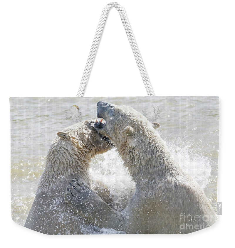 Adult Weekender Tote Bag featuring the photograph Polar Bear by Shaun Wilkinson