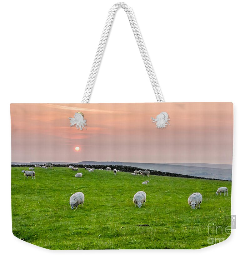 Airedale Weekender Tote Bag featuring the photograph Sheep by Mariusz Talarek