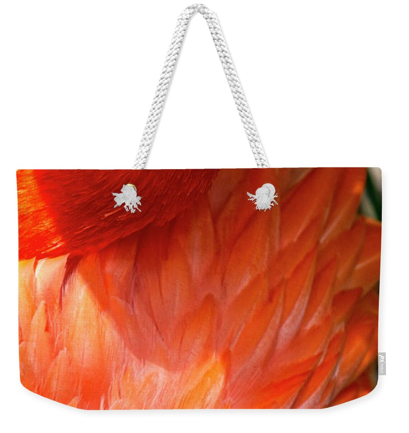 Florida Weekender Tote Bag featuring the photograph 5060- Flamingo by David Lange