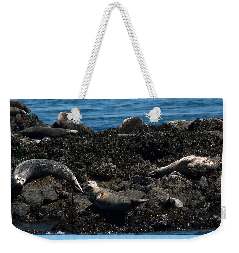 Swan Weekender Tote Bag featuring the photograph Clear Day Barn by Linda Kerkau