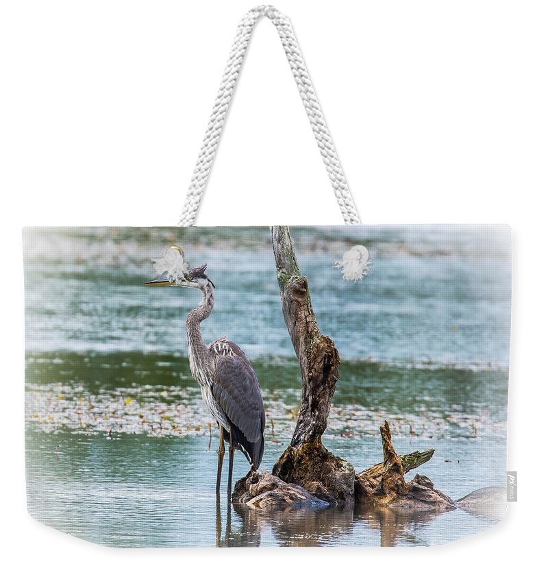 Bird Weekender Tote Bag featuring the photograph Great Blue Heron by Ronald Grogan