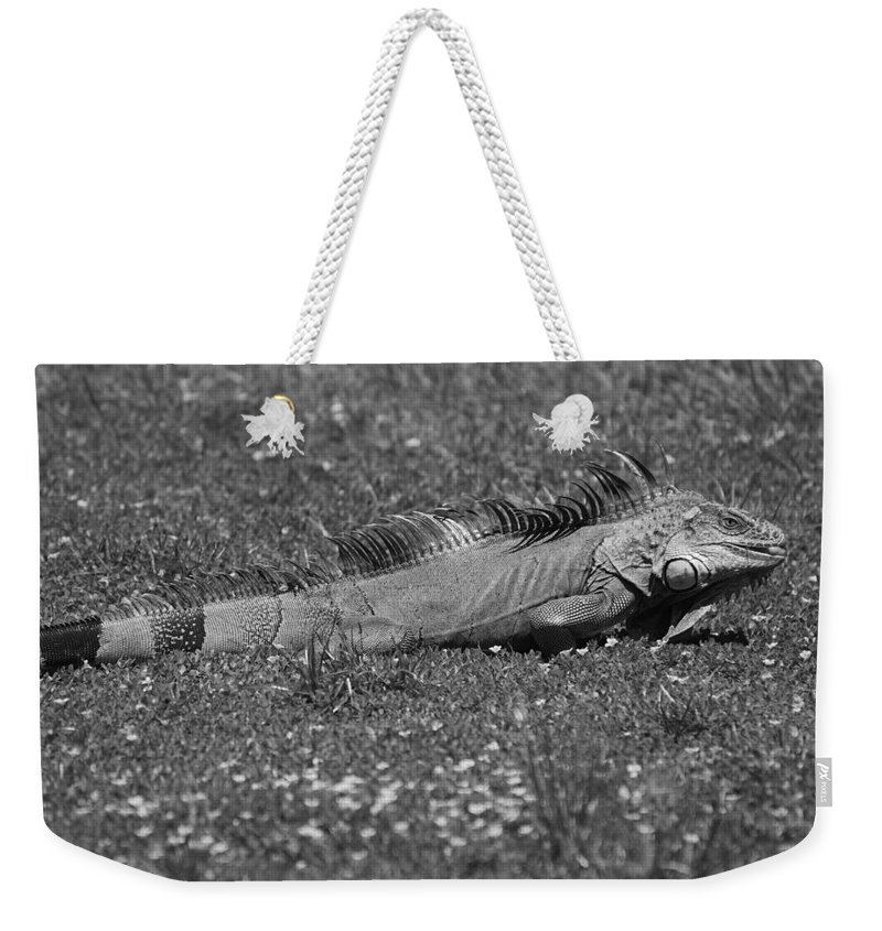 Sun Weekender Tote Bag featuring the photograph I Iguana by Rob Hans