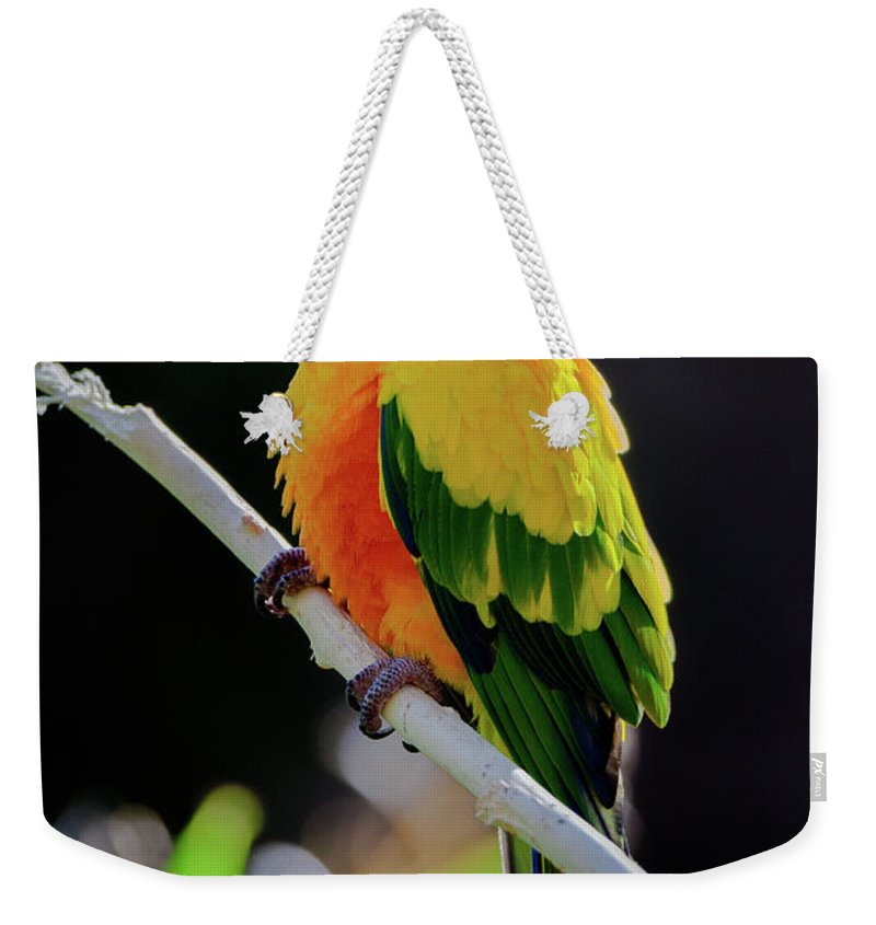 Parrot Weekender Tote Bag featuring the photograph Parrot by Hristo Shanov