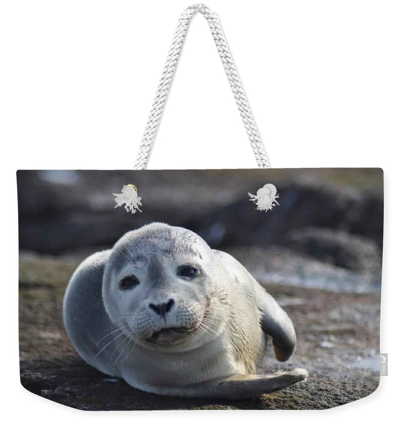 Seal Weekender Tote Bag featuring the photograph Seal by FL collection