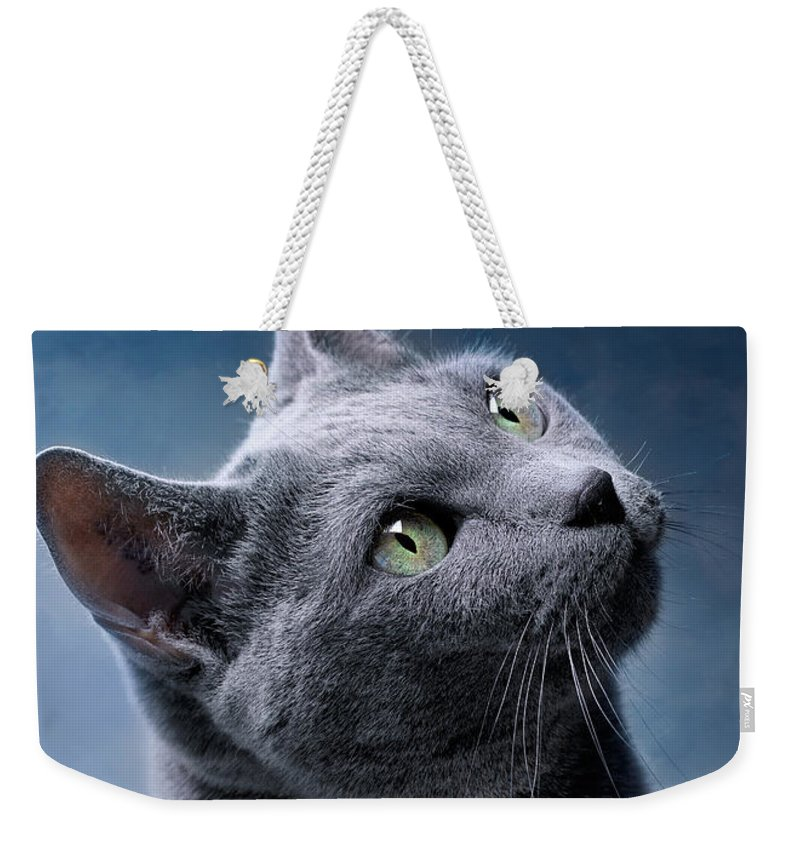 Russian Weekender Tote Bag featuring the photograph Russian Blue Cat by Nailia Schwarz