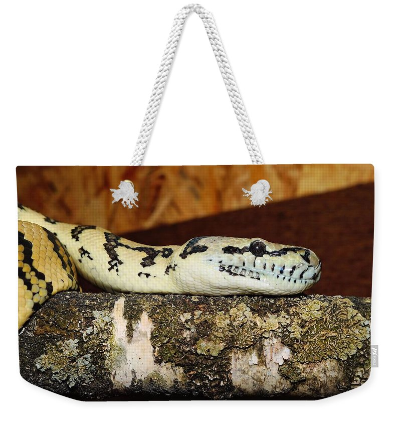 Snake Weekender Tote Bag featuring the photograph Snake by FL collection
