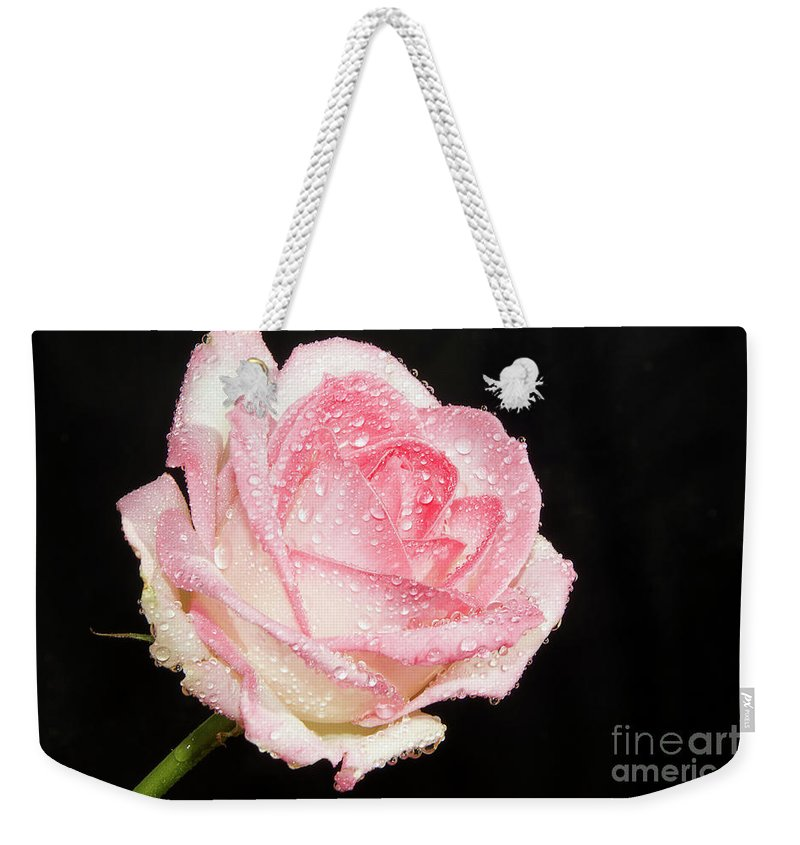 Flowers Weekender Tote Bag featuring the photograph Pink Rose by Elvira Ladocki