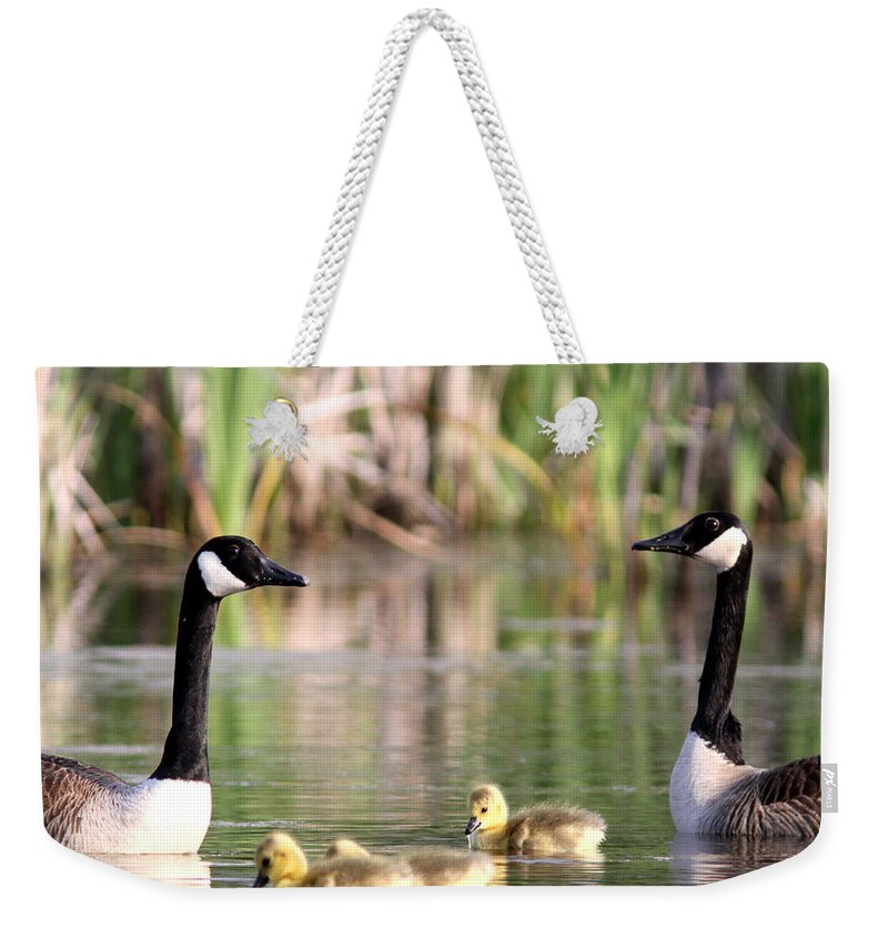 Canada Goose Weekender Tote Bag featuring the photograph 8132 - Canada Goose by Travis Truelove