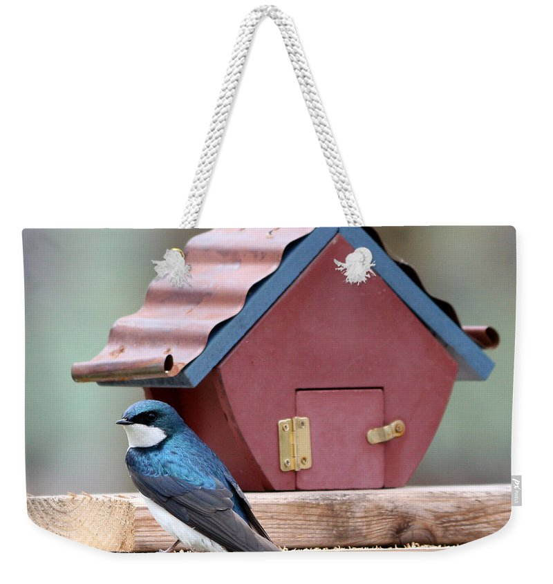 Finch Weekender Tote Bag featuring the photograph Tree Swallow by Lori Tordsen