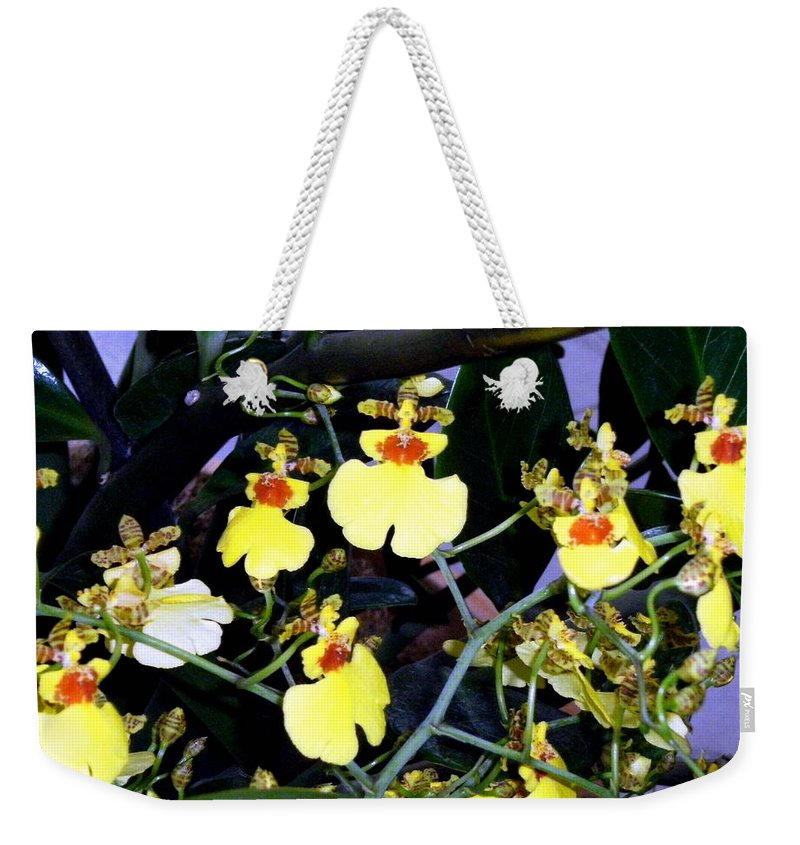 Orchids Weekender Tote Bag featuring the photograph A Ballet Of Tiny Orchids by Mindy Newman