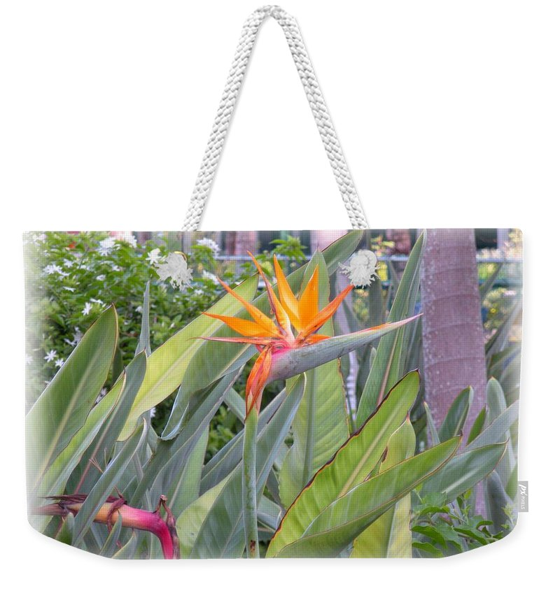 Plant Weekender Tote Bag featuring the photograph A Bird In Paradise by Maria Bonnier-Perez