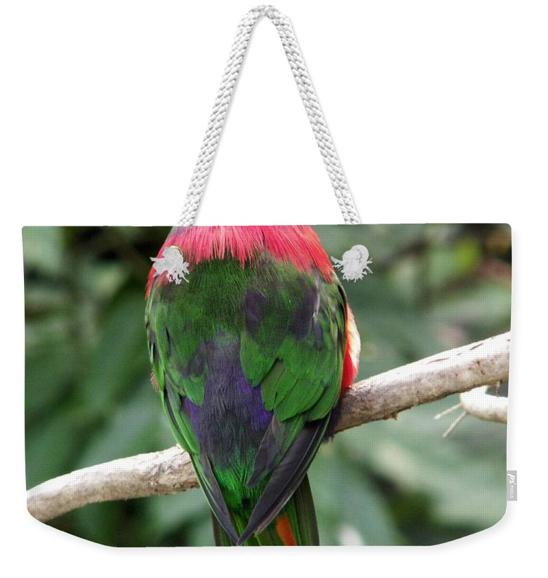 Bird Weekender Tote Bag featuring the photograph A Bird's Perspective by Amy Fose