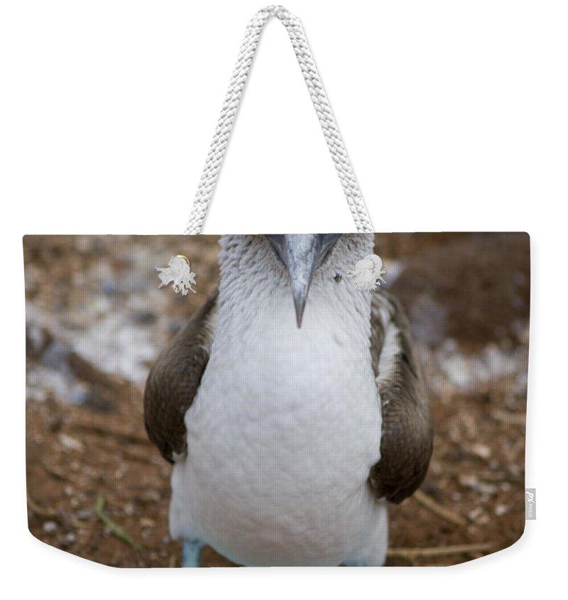 Boobies Weekender Tote Bags