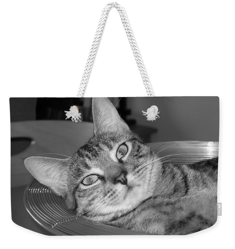Cat Weekender Tote Bag featuring the photograph A Bowl Of Ginger by Maria Bonnier-Perez
