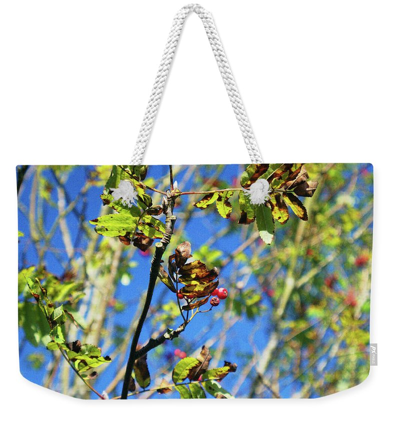 Trees Weekender Tote Bag featuring the photograph A Branch Standing Out From The Crowd by James Golding