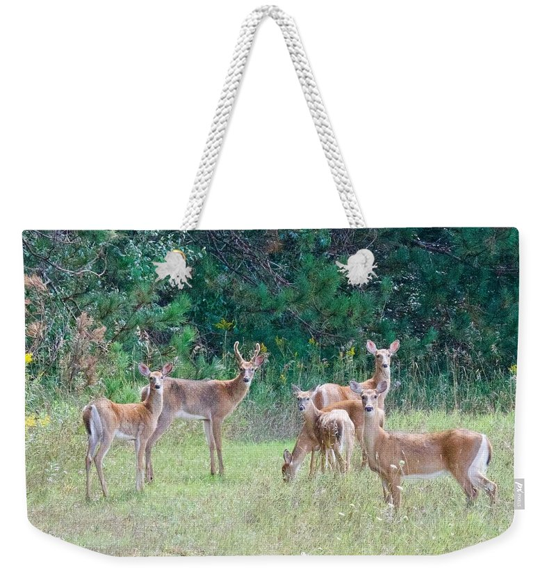 Deer Weekender Tote Bag featuring the photograph A Buck And His Does by Michael Peychich
