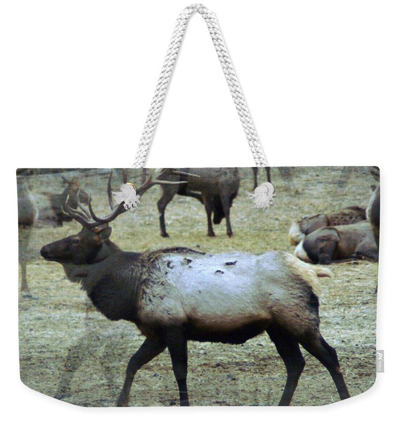 Elk Weekender Tote Bag featuring the photograph A Bull Elk by Jeff Swan