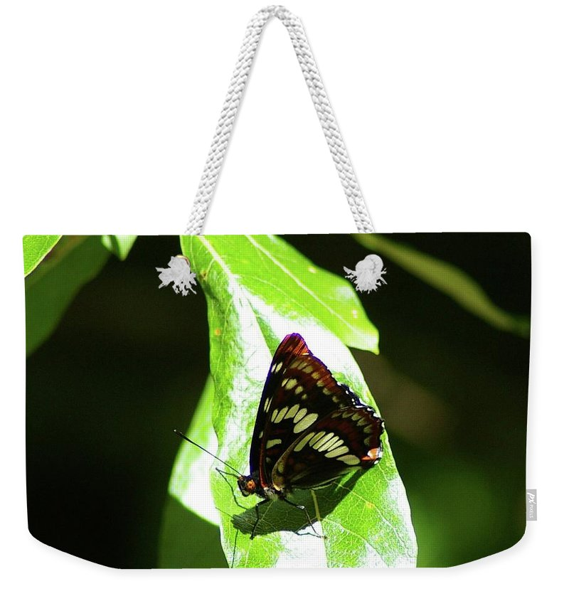 Butterfly Weekender Tote Bag featuring the photograph A Butterfly In The Sun by Jeff Swan