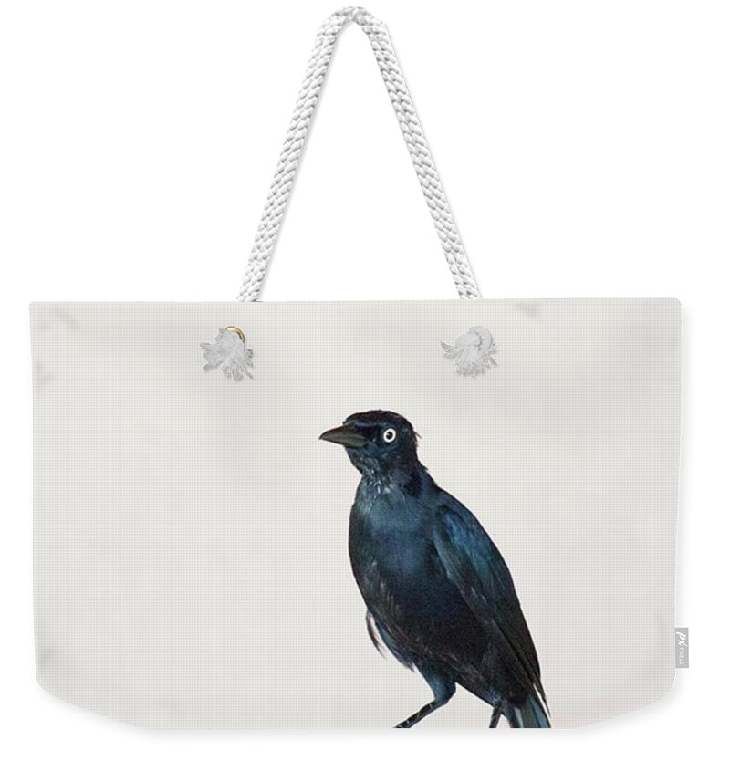 Caribgrackle Weekender Tote Bag featuring the photograph A Carib Grackle (quiscalus Lugubris) On by John Edwards