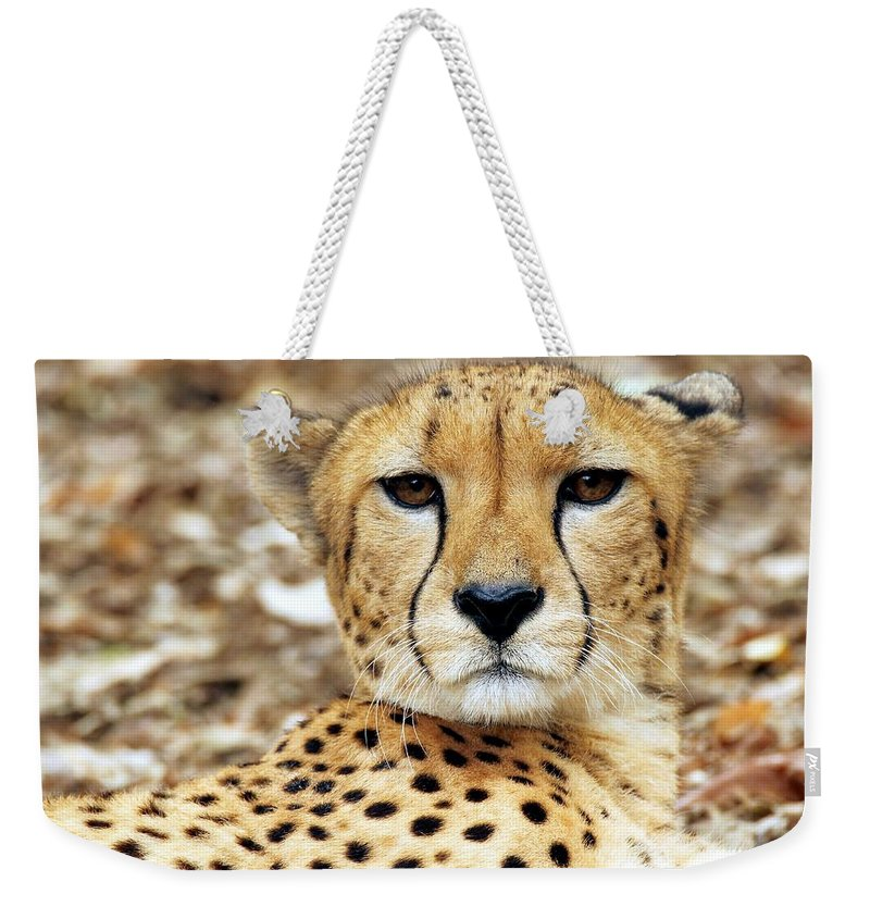 Cheetah Weekender Tote Bag featuring the photograph A Cheetah's Portrait by Christopher Miles Carter
