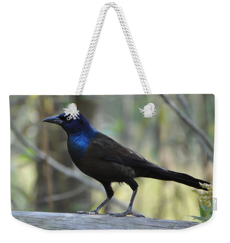 Birds Weekender Tote Bag featuring the photograph A Clever Thief by Jan Amiss Photography
