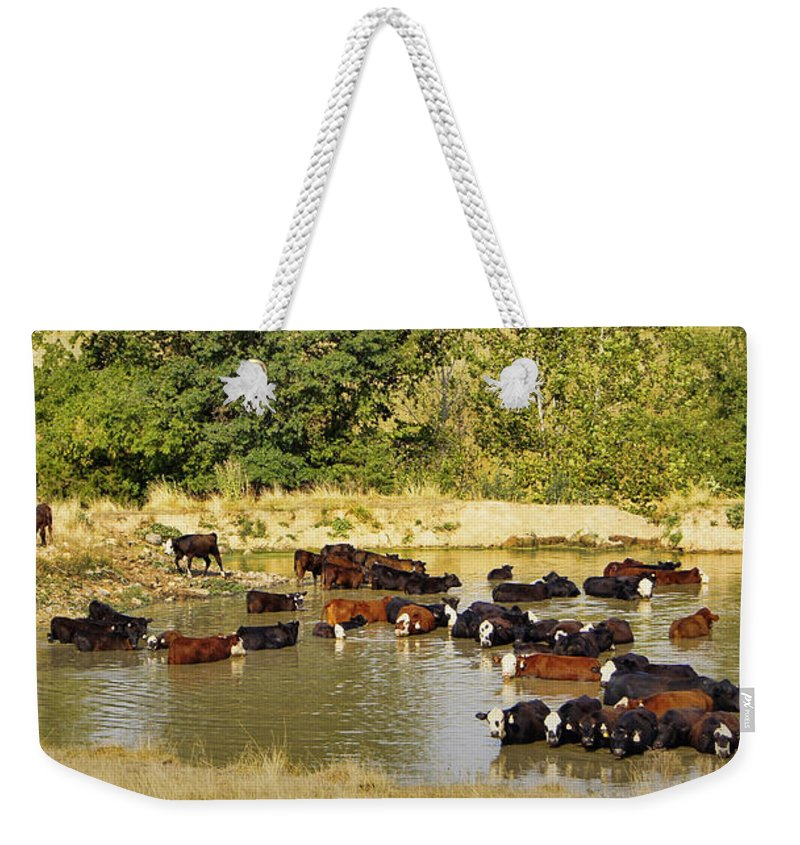 Cattle Weekender Tote Bag featuring the photograph A Day At The Spa by Cricket Hackmann
