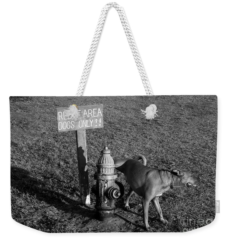 Dog Weekender Tote Bag featuring the photograph A Dog's Life by David Lee Thompson