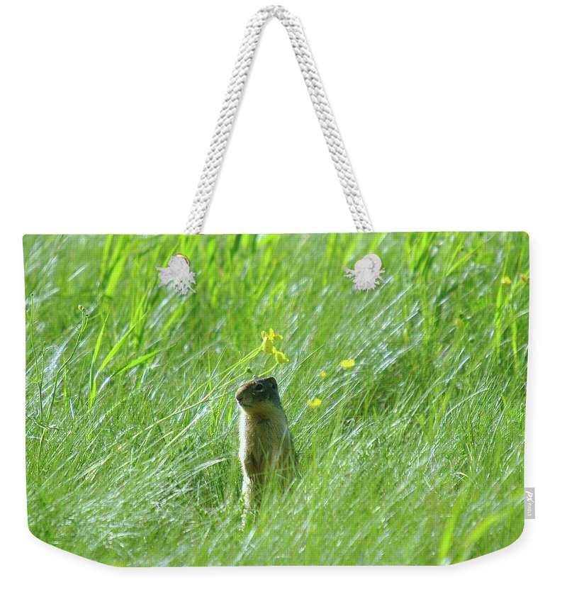 Gophers Weekender Tote Bag featuring the photograph A Fernie Gopher by Jeff Swan