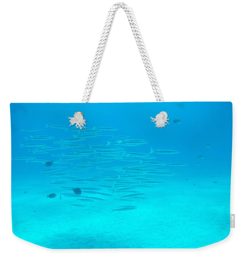 Animal Weekender Tote Bag featuring the photograph A Fish Shoal In Blue Water by Rolf Brenner